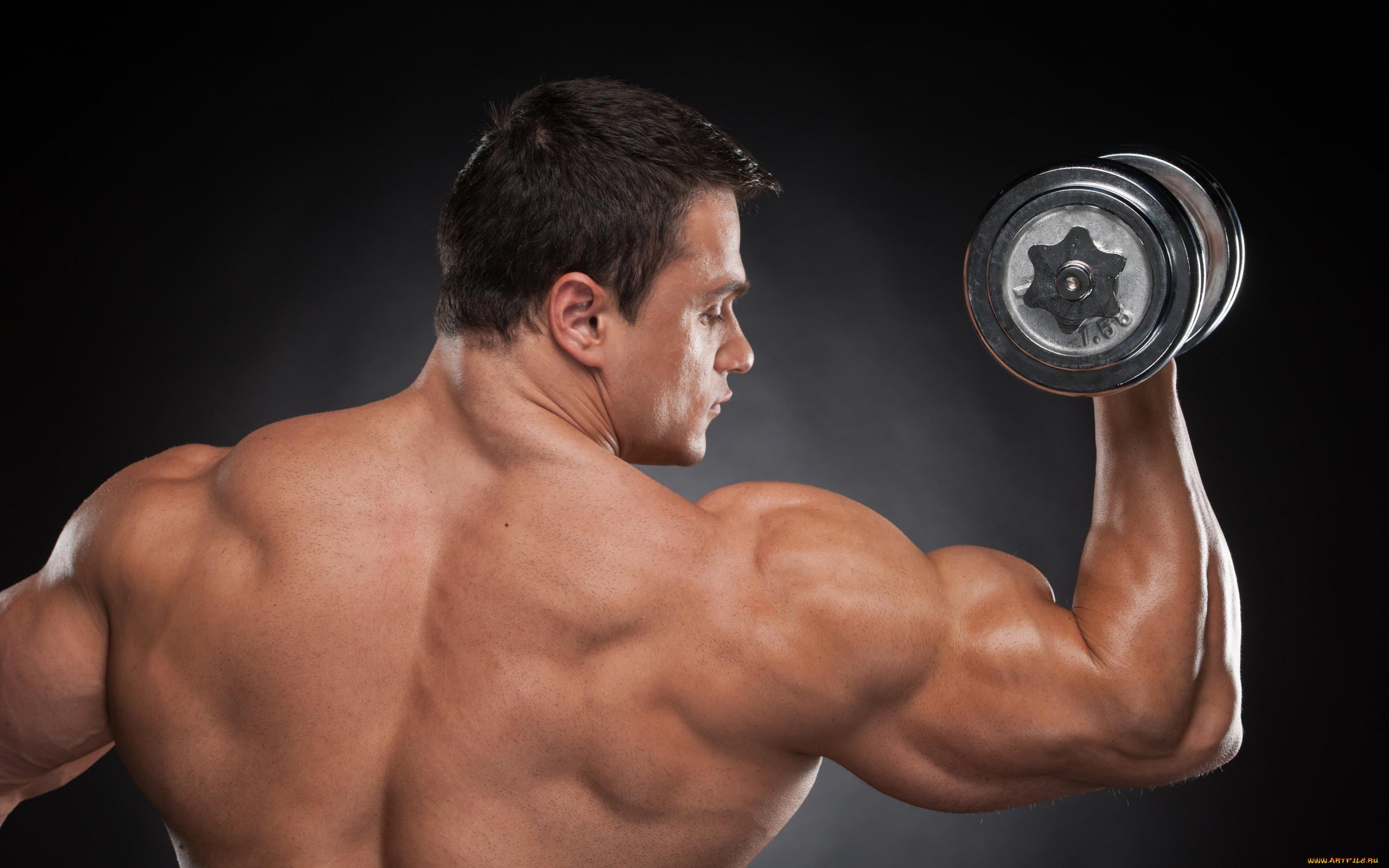 один наиболее картинки работы мышц при бодибилдинге едят арбузы грецкий
